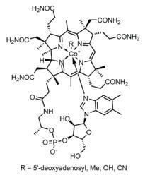Vitamin B12 Structure