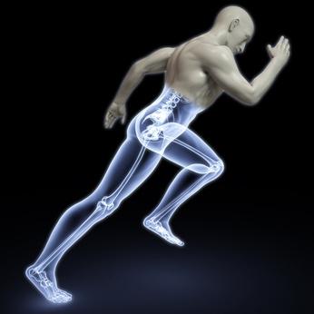 bones bearing weight