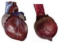 Heart and Beet compared