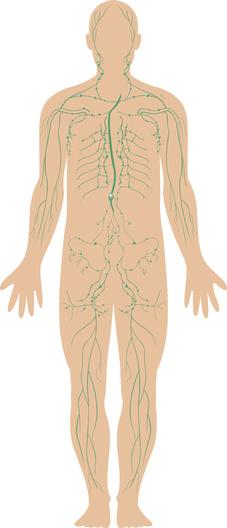 Lymphatic system diagram improving circulation of the human lymphatic system diagram ccuart Images